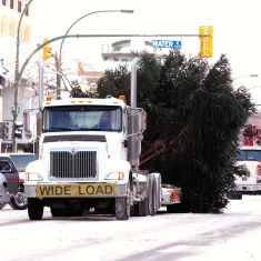 City of Kelowna's Christmas Tree